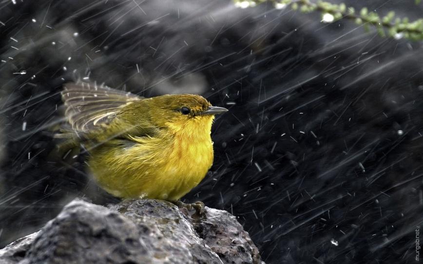 Птица под дождем