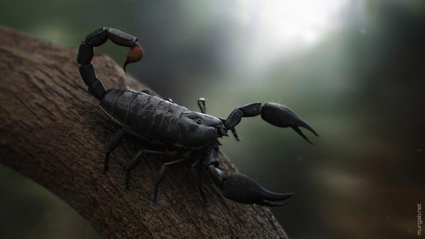 Клещи —не насекомые, они относятся к паукообразным и приходятся близкими родственниками скорпионам и паукам