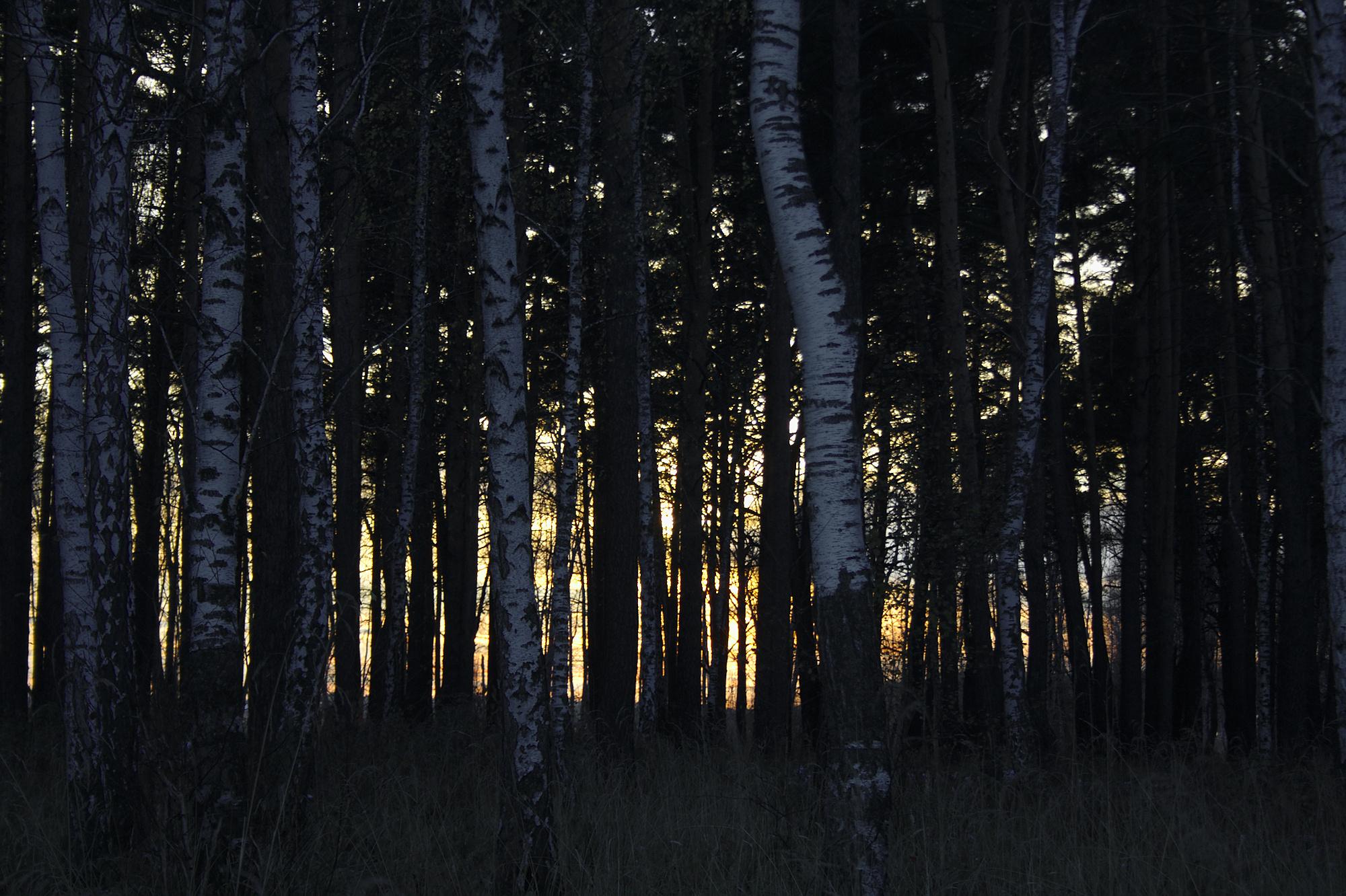 Это странно... Раньше их находили только и в лесу...