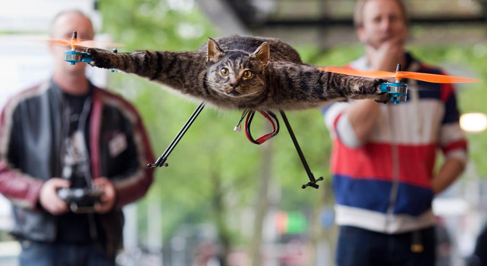 Квадрокоптер из мертвой кошки