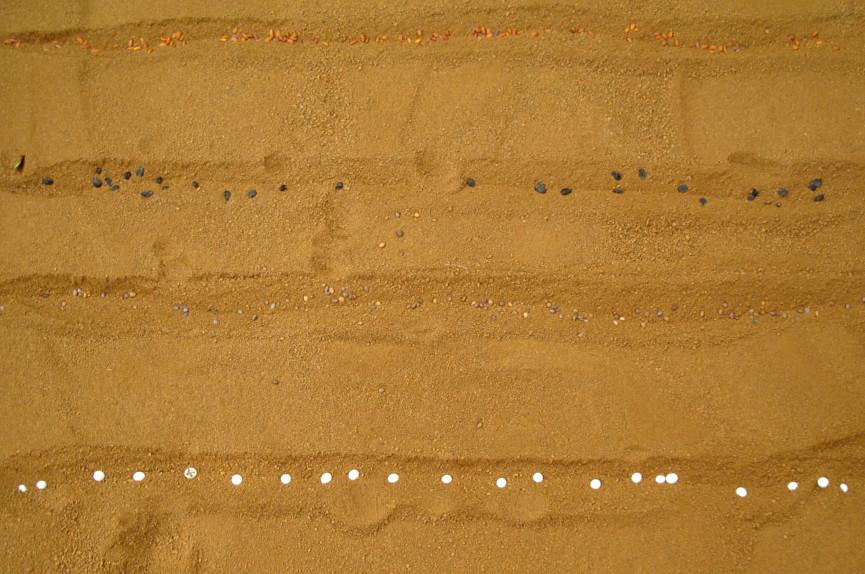 Эксперимент по выращиванию культур в марсианской почве