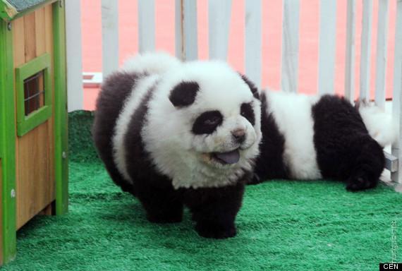 Фальшивая панда