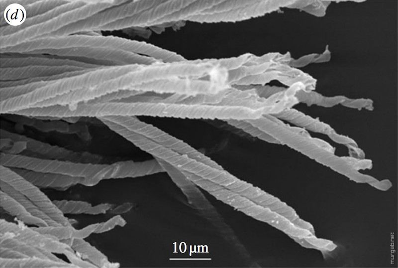 Окаменелая сперма возрастом 16 миллионов лет